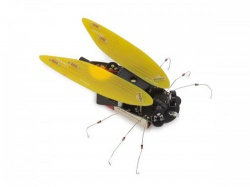 elektronische cicade - wsak204